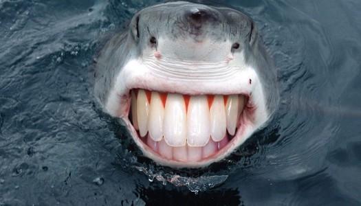 Životinje sa krajnje neobičnim zubima