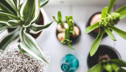 Sobne biljke koje gode organizmu