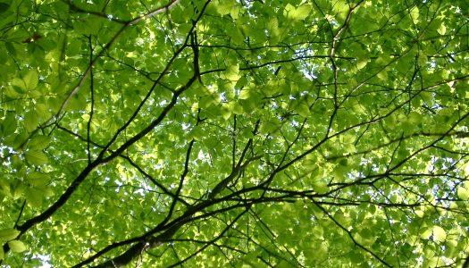 Koliko listova ima drvo?