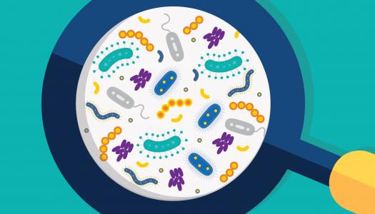 Da li ste čuli za Human Microbiome Project?