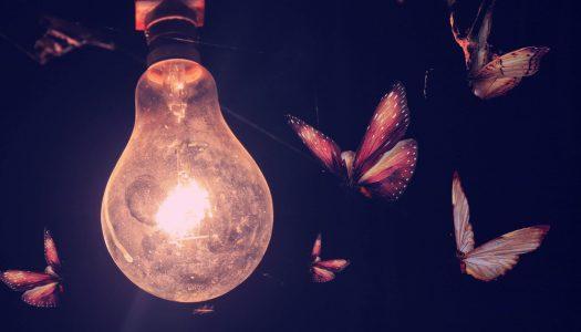Zašto svetlo privlači noćne bubice?