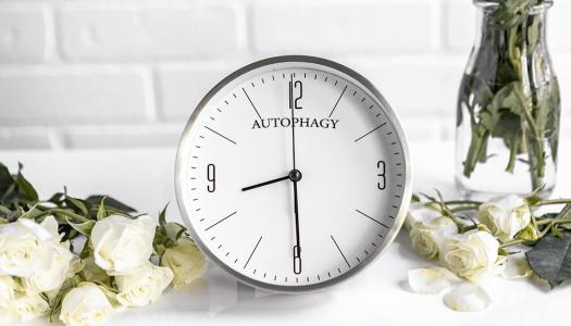 Autofagija – proces koji potpuno podmlađuje organizam