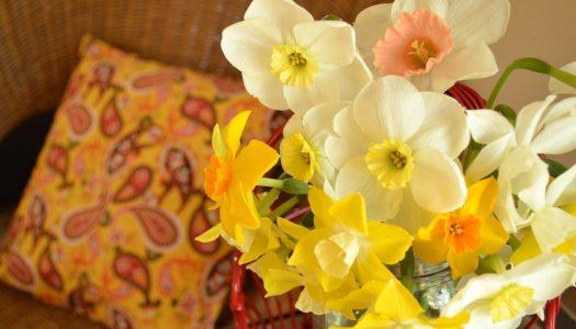 Narcis – cvet samoljublja, ali i novih početaka