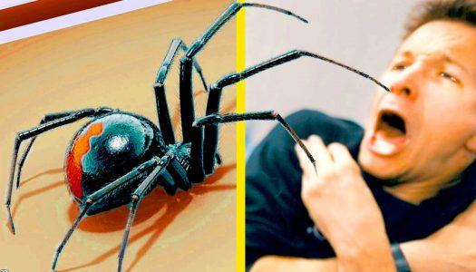 Oslobodite se straha od paukova na lakši način