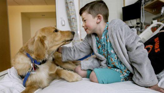 Bolnica u kojoj su životinje doktori i terapeuti