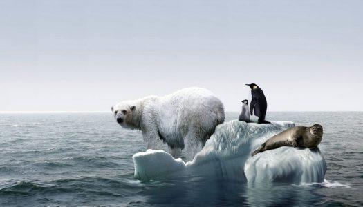 Ugrožene životinjske vrste na Arktiku