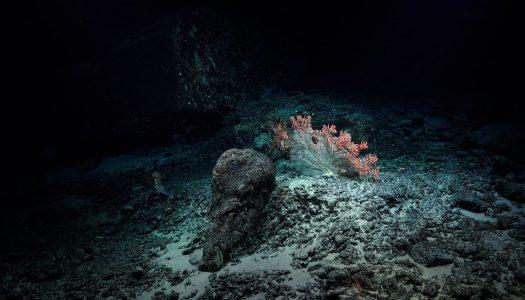 Koliko je naše poznavanje morskog dna?